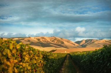 "<img src=""winery-vineyard-financing-options-available-jeff-clark-live-oak-bank.jpg""title=""Live Oak Bank Jeff Clark""alt=""We can help you finance your winery and estate vineyard jeff clark with live oak bank lender"">"
