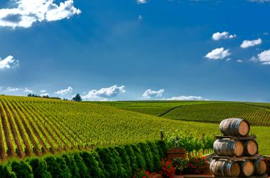 """<img src=""""agricultural-careers-jobs-western-united-stated-pacific-northwest-farm-real-estate-agents-wanted-Washington-Oregon-Idaho-Montana-California.jpg""""title=""""Spring Day with vineyard Walla Walla Blue mountains wine country""""alt=""""Agribusiness Trading Group is Seeking Additional Team Members Throughout the Western United States real estate agents brokers agriculture agricultural Pacific Northwest"""">"""