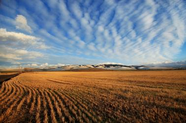 snowy blue mountains walla walla wa farms for sale agriculture real estate farm brokers in walla walla dry land wheat farm for sale washington CRP ground for sale winery and vineyard for sale walla walla real estate farm broker agriculture blue mountains real estate agent farms for sale land for sale farm ground CRP recreational property dry land  WA OR ID Washington Idaho Oregon Pacific Northwest