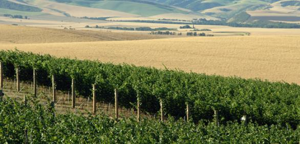 """<img src=""""farm-sellers-wanted-lokking-for-land-forsale-sale-in-washington-state-farmland-farms-pacific-northwest-walla-walla-farmground-property-farmland.jpg""""title=""""Looking for Farms for sale""""alt=""""farms for sale in washington state farmland farm for sale walla walla farm ground property for sale sold land for sale farms for sale washington state farms in washington state pacific northwest dry land farm"""">"""