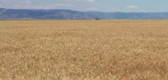 """<img src=""""wheat-college-dayton-washington-agricultural-marketing-and management-organization-wheat-growers-association-agriculture-walla-walla-farm-broker.jpg""""title=""""Wheat College 2019 Dayton Washington""""alt=""""Washington Associatiton of Wheat Growers walla walla washington state"""">"""