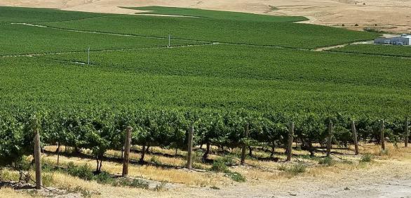 "<img src=""Rattlesnake-Hills-AVA-vineyard-and-winery-for-sale-Yakima-County-Washington-wineries-vineyards-Zillah-valley.jpg""title=""Rattlesnake Hills AVA vineyard and winery for sale in yakima county Washington wineries wine vineyards real estate broker specialty""alt=""Rattlesnake Hills AVA vineyard and winery for sale Washington Yakima County"">"