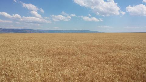 "<img src=""farms-for-sale-in-washington-state-farmland-farm-walla-walla-farmground-property-sold-pacific-northwest-western-united-states-oregon-idaho-montana-california-farming-land-irrigated-crp-dryland-dry-vineyard-wheat-winery-corn-cropland-state-acre-acres-circle-organic-best-real-estate-agent-broker.jpg""title=""Farms Farmland Farm Ground for sale Land acres Western United States Pacific Northwest""alt=""farms for sale in washington state farmland farm oregon idaho montana real estate agent and brokers"">"