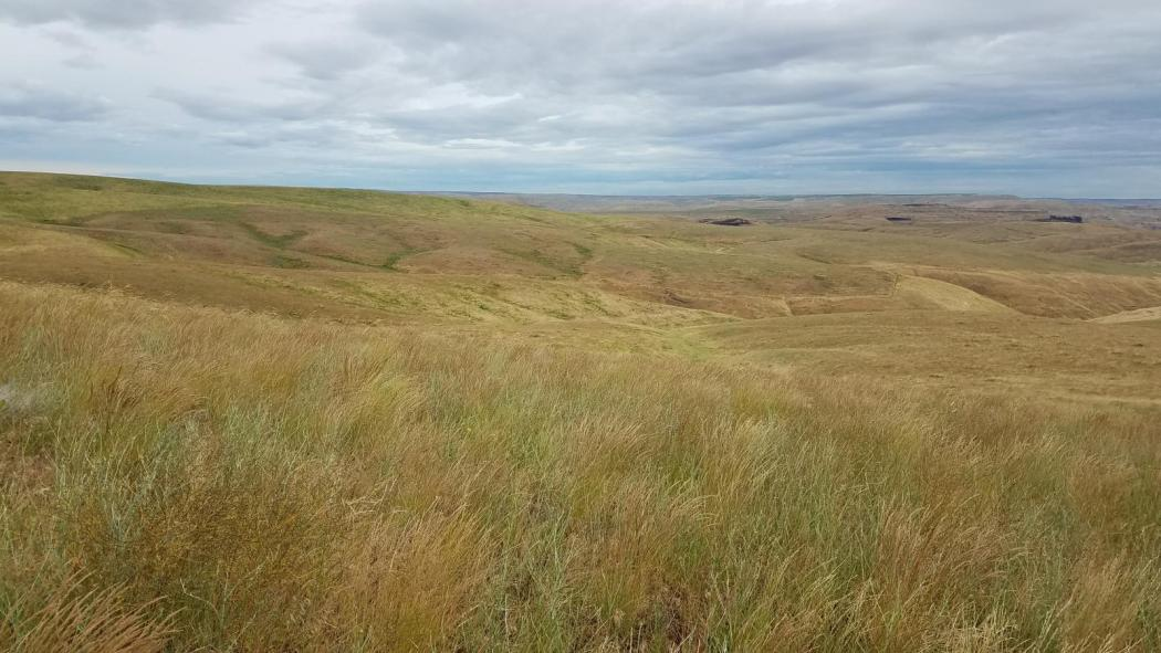 "<img src=""farm-and-ranch-for-sale-in-columbia-county-washington-state-starbuck-farmland-farm-for-sale-walla-walla-grazing-ground-tillable-acres-farm-ground-property-for-sale-sold-land-for-sale-farms-state-farms-in-washington-state.jpg""title=""Columbia County Farm and ranch for sale Starbuck washington""alt=""farms for sale in starbuck washington state farmland farm for sale walla walla farm ground property for sale sold land for sale farming farms in washington state dry land farm"">"
