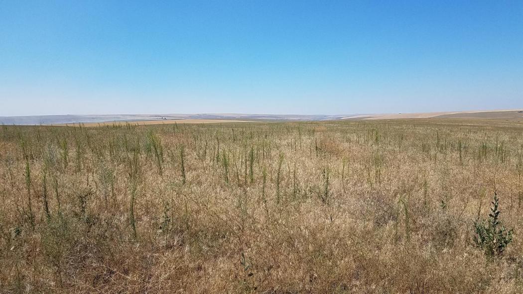 "<img src=""crp-farm-for-sale-prescott-washington-walla-walla-county-house.jpg""title=""Wahl Road CRP Farm and house for sale""alt=""crp farms for sale in oregon land for sale in oregon farms for sale in oregon washington state land by Oregon Idaho Real estate walla walla agents brokers dry land wheat farm"">"