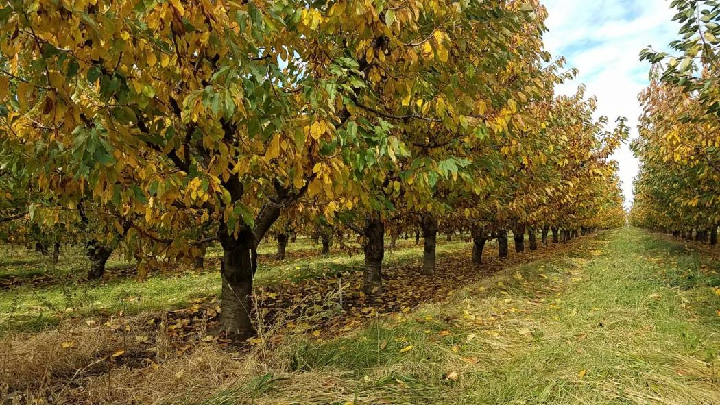 "<img src=""orchard-vineyard-for-sale-walla-walla-area-rocks-district-ava-of-milton-freewater-oregon-umatilla-county-walla-walla-valley-.jpg""title=""Orchard Vineyard for sale in the Walla Walla Area Rocks District AVA Milton Freewater Oregon""alt=""vineyard for sale walla walla area rocks district ava of milton freewater oregon umatilla county"">"