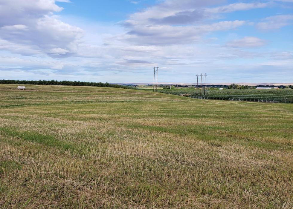 "<img src=""vineyard-site-for-sale-Umatilla-county-OR-potential-vineyard-potential-opportunity-milton-freewater-oregon-fruit-trees-winery-wine-Walla-walla-valley-american-viticultural-area-columbia-ava-planted-acres.jpg""title=""vineyard site for sale milton freewater oregon umatilla county fruit trees winery wine Walla walla valley american viticultural area columbia ava planted acres sell sold""alt=""Potential Vineyard Development for sale vineyard fruit tree walla walla wines ava farm ground land"">"