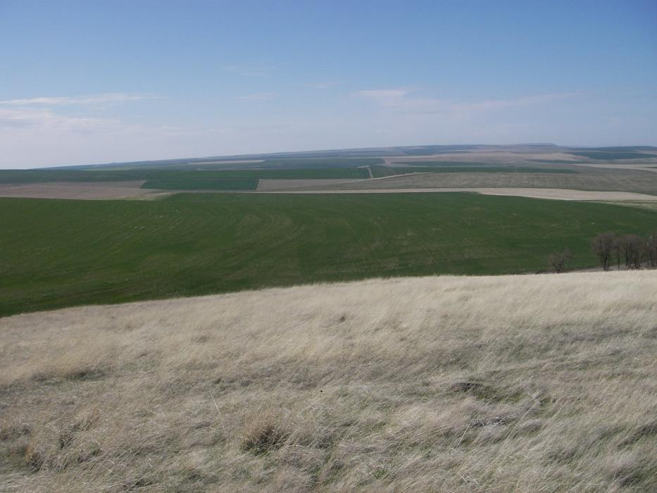 "<img src=""farms-for-sale-in-oregon-property-for-sale-in-oregon-land-for-sale-farms-for-sale-by-oregon-blue-mountains-land-washington-state-dry-land-wheat-farm-oregon-idaho-montana-land-in-oregon-for-sale-timber-ground-for-sale-walla-walla-property-for-sale-sold-land-for-sale.jpg""title=""Coe Road Dry Land Farm""alt=""farms for sale in oregon land for sale in oregon farms for sale in oregon washington state land by Oregon Idaho Real estate walla walla agents brokers dry land wheat farm"">"