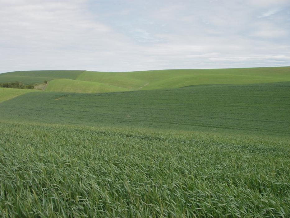 """<img src=""""farms-for-sale-in-washington-state-farmland-farm-for-sale-walla-walla-farm-ground-property-for-sale-sold-land-for-sale-farms-for-sale-washington-state-farms-in-washington-state.jpg""""title=""""Thorn Hollow Road Dry Land Farm sold Dayton Washington""""alt=""""farms for sale in washington state farmland farm for sale walla walla farm ground p roperty for sale sold land for sale farms for sale washington state farms in washington state thorn hollow dry land farm"""">"""