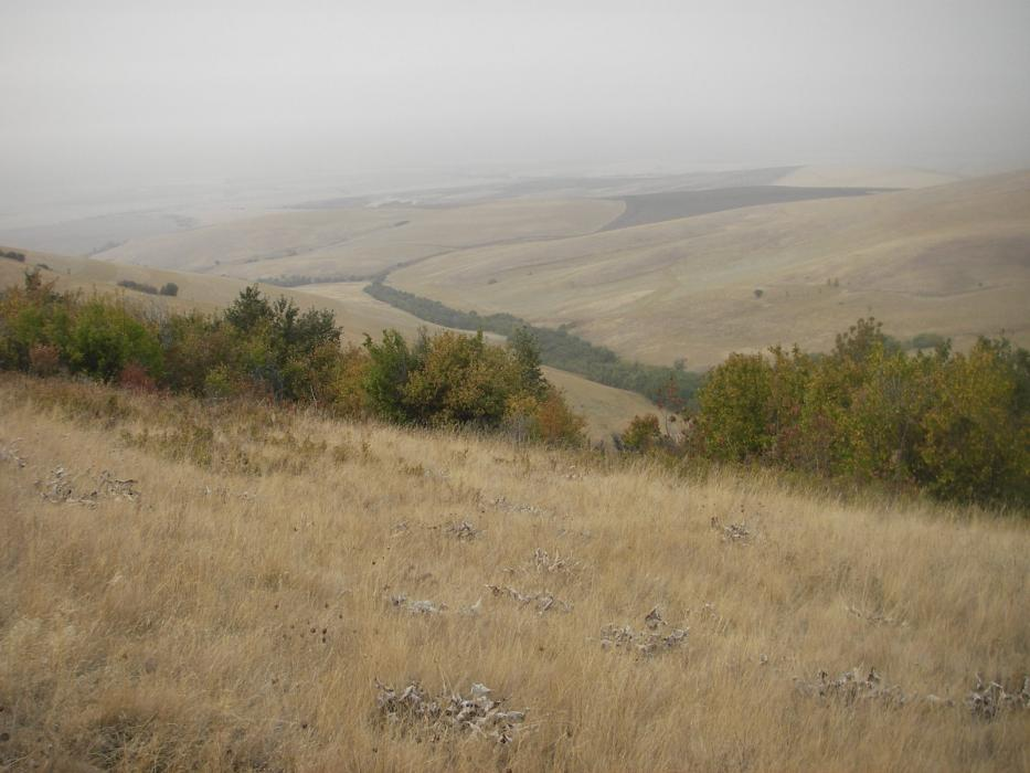 "<img src=""Coppei-Creek-Canyon-Ranch-crp-for-sale-milton-freewater-oregon-area-farms-for-sale-pacific-northwest.jpg""title=""Coppei Creek Canyon Ranches for sale""alt=""blue mountains Coppei Creek South View farm and ranches for sale walla walla washington oregon idaho montana real estate agents agriculture for sale land for sale farms for sale ranches for sale recreational property for sale winery for sale vineyard for sale walla walla wineries near me land for sale near me"">"
