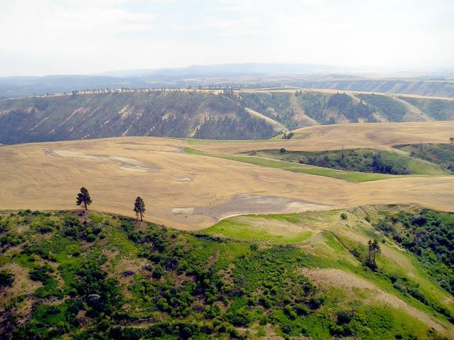"<img src=""Looking-South-at-Coppei-Creek-Canyon-Road-Ranch-Farm-and-Ranches-for-sale-walla-walla-washington-area.jpg""title=""Coppei Creek Canyon Road Ranches for sale""alt=""blue mountains Coppei Creek South View, farm and ranches for sale, walla walla washington, oregon, idaho, montana, real estate agents, agriculture for sale, land for sale, farms for sale, ranches for sale, recreational property for sale, winery for sale, vineyard for sale, walla walla wineries, wineries near me, land for sale near me"">"