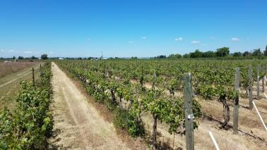 """<img src=""""winery-and-vineyard-for-sale-offered-opportunity-walla-walla-area-rocks-district-ava-of-milton-freewater-umatilla-county-washington-oregon-valley-orchards-for-sale-wineries-vineyards-acres-planted-vines-tasting-room-production-facility.jpg""""title=""""Walla Walla Area Rocks District AVA Winery and Vineyard Milton Freewater Oregon""""alt=""""winery and vineyard for sale offered opportunity walla walla area rocks district ava of milton freewater umatilla county washington oregon"""">"""