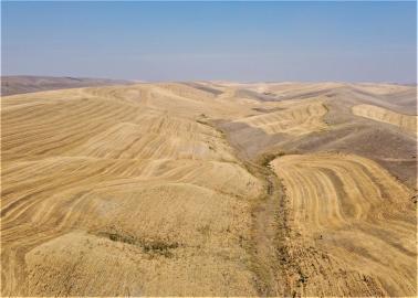 Dryland wheat farm for sale, Walla Walla County, WA
