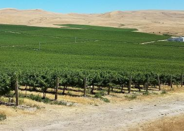 "<img src=""Rattlesnake-Hills-AVA-vineyard-and-winery-for-sale-Yakima-County-Washington-wineries-vineyards-Zillah-valley.jpg""title=""Rattlesnake Hills AVA vineyard and winery for sale in yakima county Washington wineries wine vineyards real estate broker specialty""alt=""Rattlesnake Hills AVA vineyard and winery for sale Washington Yakima County"">"