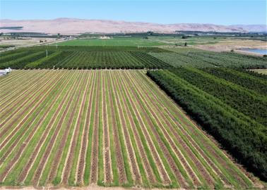 Irrigated Apple and Pear Orchard, Yakima Valley, Washington for sale