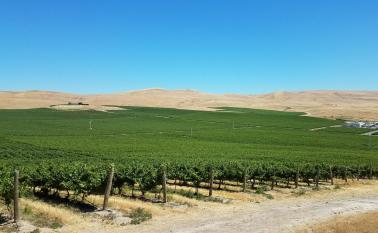 """<img src=""""vineyard-for-sale-Yakima-County-Valley-Washington-Zillah-Roza-vineyards-winery-Rattlesnake-AVA-permanent-crop-farm-real-estate-broker-sell-buy-wineries-pacific-northwest-western-united-states-near-me-valley.jpg""""title=""""vineyard for sale in yakima county Washington near Zillah planted red and white grapes potential Rattlesnake AVA wineries wine vineyards real estate broker""""alt=""""vineyard for sale near Zillah Washington Yakima County valley WA wineries vineyards acres planted red and white grapes"""">"""