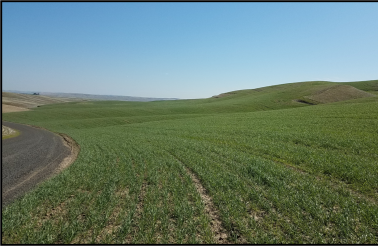 "<img src=""Walla-Walla-County-Dry-Land-Wheat-Farm-For-Sale-Washington-State-Touchet-River-hunting-income-farmground-farmland-property-available-blue-mountain-real-estate-land.jpg""title=""Johnson road touchet river washington dry land wheat farm for sale hunting ground farmground property available walla walla county"">"