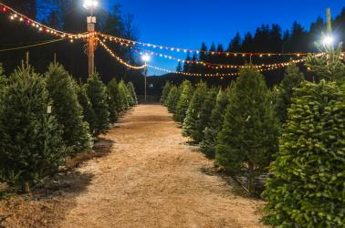 christmas trees,forestry,pacific northwest,agriculture