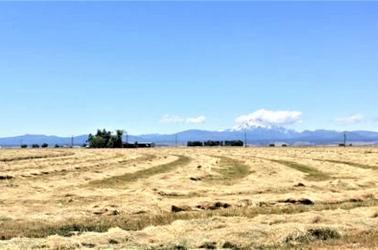 90% World Supply of Kentucky Bluegrass grown in the Pacific Northwest,alternate crop,Washington Turfgrass Seed Commission,Washington State dryland grass farm,land management tool