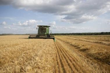 farmers,wheat harvest,combine