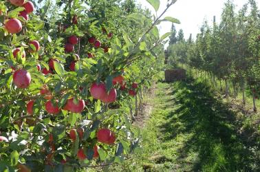 Apple and Pear Orchard for Sale in Yakima County, Washington