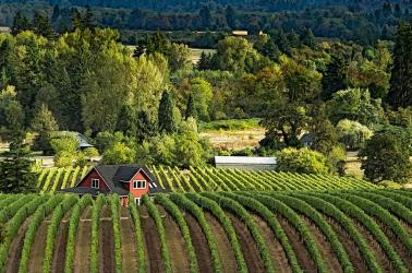 "<img src=""oregon-economy-wine-industry-yamhill-county-portland-willamette-valley-ava-mcminnville-oregon-wineries-vineyard-walla-walla-real-estate-brokers.jpg""title=""Oregon's economy sees big impact from wine industry yamhill county Portland mcminnville oregon willamette valley ava""alt=""Willamette Valley AVA"">"
