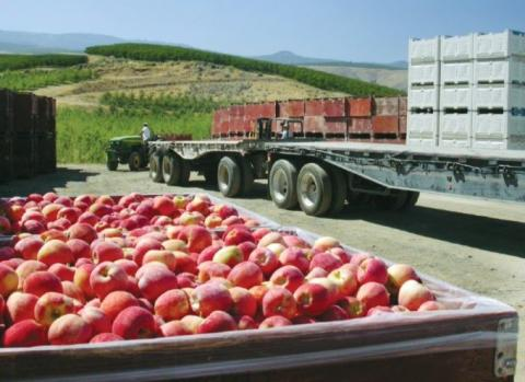 Apples,Global Shipping, Farmers