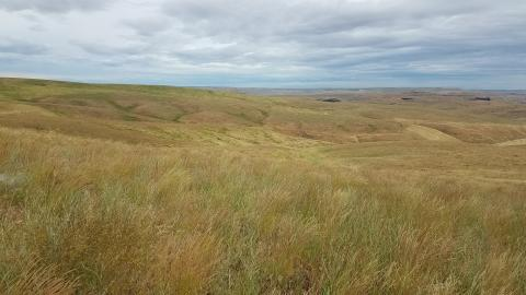 """<img src=""""crp-contract-farm-service-agency-fsa-program-conservation-reserve-program-acres-agtricultural-farming-contracted-land-usda-contracts-expire-farm-ground-expiring-expired-for-sale-walla-walla-area-washington-brokers-farmland-blue-mountains-.jpg""""title=""""Options for CRP Contract expiring""""alt=""""CRP contract fsa program contracted land usda farm ground for sale farmground for lease land for sale conservation reserve program contracts expiring farms washington walla walla agricultural farm broker"""">"""