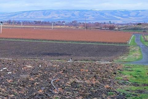 """<img src=""""potential-vineyard-potential-opportunity-milton-freewater-oregon-winery-wine-Walla-walla-valley-american-viticultural-area-columbia-ava-planted-acres.jpg""""title=""""vineyard for sale milton freewater oregon umatilla county winery wine Walla walla valley american viticultural area columbia ava planted acres sell sold""""alt=""""Oregon vineyard  walla walla wines ava farm ground land"""">"""