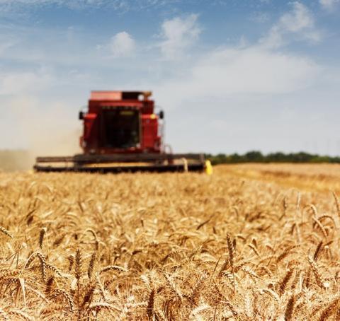 "<img src=""pacific-northwest-wheat-aids-hunger-crisis-Yemen-Middle-East-walla-walla-washington-grass-valley-oregon-bushels-sale-walla-walla-farm-ground-property-for-sale-sold-land-for-sale-farms-for-sale-washington-state-farms.jpg""title=""Pacific Northwest Wheat Aids in Hunger Crisis""alt=""Pacific Northwest Wheat Aids in Hunger Crisis walla walla washington farm brokers"">"