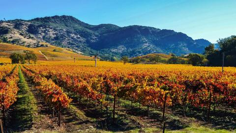 How will the wildfires affect the 2020 wine harvest