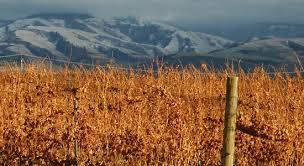 """<img src=""""financing-options-for-to-purchase-buy-acquire-winery-or-and-vineyard-for-sale-in-Washington-State-wineries-property-real-estate-broker-sell-buy-wineries-pacific-northwest-western-united-states-near-me-valley.jpg""""title=""""financing options for to purchase buy acquire winery and or vineyard winery for sale Washington potential wineries wine vineyards real estate broker""""alt=""""financing options to purchase acquire winery and or vineyard for sale near Washington State County"""">"""
