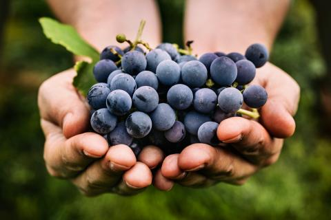 "<img src=""Spring-release-weekend-walla-walla-washington-2019-wineries-Vineyards-Valley.jpg""title=""walla walla valley spring release weekend 2019""alt=""walla walla washington spring release weekend May 2019"">"