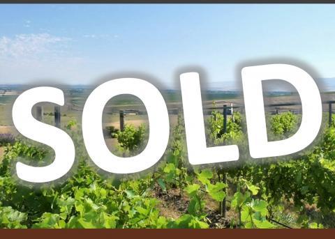 winery,vineyard,for sale,walla walla