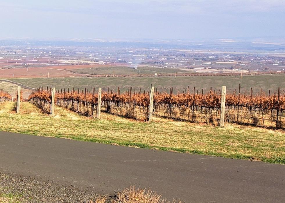 "<img src=""SeVein-vineyard-for-sale-Walla-Walla-AVA-County-Washington-wine-real-estate-broker-sell-buy-wineries-vineyards-sold-pacific-northwest-washington-state-near-me-valley.jpg""title=""SeVein vineyard for sale in walla walla county Washington wineries wine vineyards real estate broker specialty""alt=""SeVein vineyard for sale near in around Milton Freewater Oregon Walla Walla Valley AVA Washington wineries vineyards wine tasting"">"