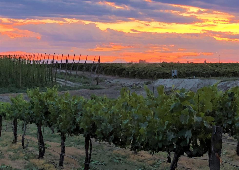 """<img src=""""Rattlesnake-Hills-AVA-vineyard-and-winery-for-sale-Yakima-County-Washington-wine-real-estate-broker-sell-buy-wineries-vineyards-sold-pacific-northwest-washington-state-near-me-valley.jpg""""title=""""Rattlesnake Hills AVA vineyard and winery for sale in yakima county Washington wineries wine vineyards real estate broker specialty""""alt=""""Rattlesnake Hills AVA vineyard and winery for sale near in around Outlook Washington Yakima County"""">"""