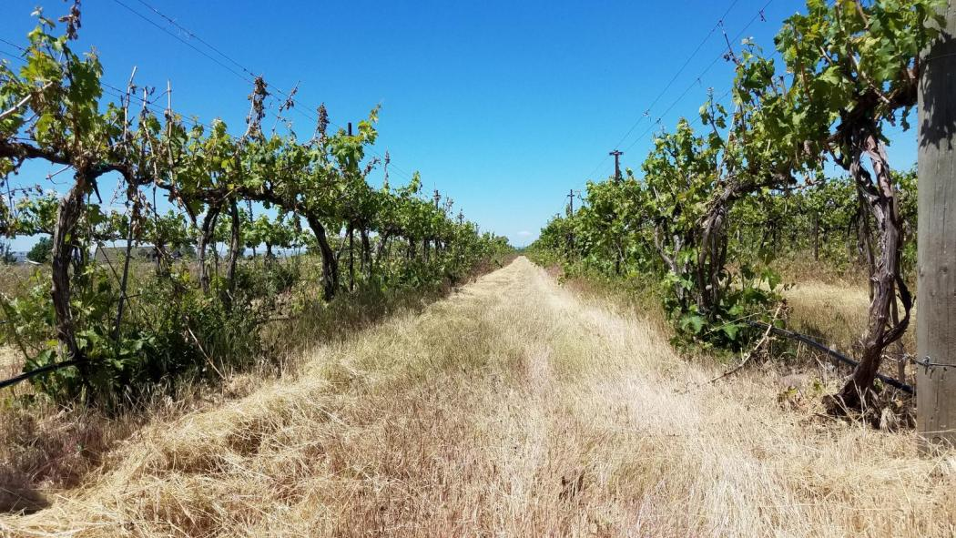 "<img src=""winery-and-vineyard-for-sale-offered-opportunity-walla-walla-area-rocks-district-ava-of-milton-freewater-umatilla-county-washington-oregon-valley-orchards-for-sale-wineries-vineyards-acres-planted-vines-tasting-room-production-facility.jpg""title=""Walla Walla Area Rocks District AVA Winery and Vineyard Milton Freewater Oregon""alt=""winery and vineyard for sale offered opportunity walla walla area rocks district ava of milton freewater umatilla county washington oregon"">"