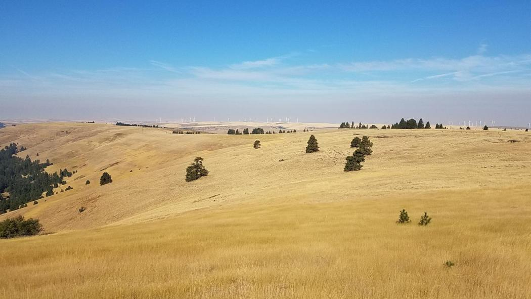 "<img src=""Patit-Road-Farm-Recreation-Grazing-Ranch-For-Sale-Columbia-County-hunting-grazing-income-farmground-dayton-washington-walla-walla-property-available-columbia-county-blue-mountain-real-estate-land-dry-land-wheat-ground-irrigated-land-for-sale-washington-state-oregon-idaho-montana-recreation-area-wildlife-crp-contract.jpg""title=""Patit road farm recreation grazing ranch for sale columbia county hunting grazing income farmground dayton washington walla walla property available columbia county"">"