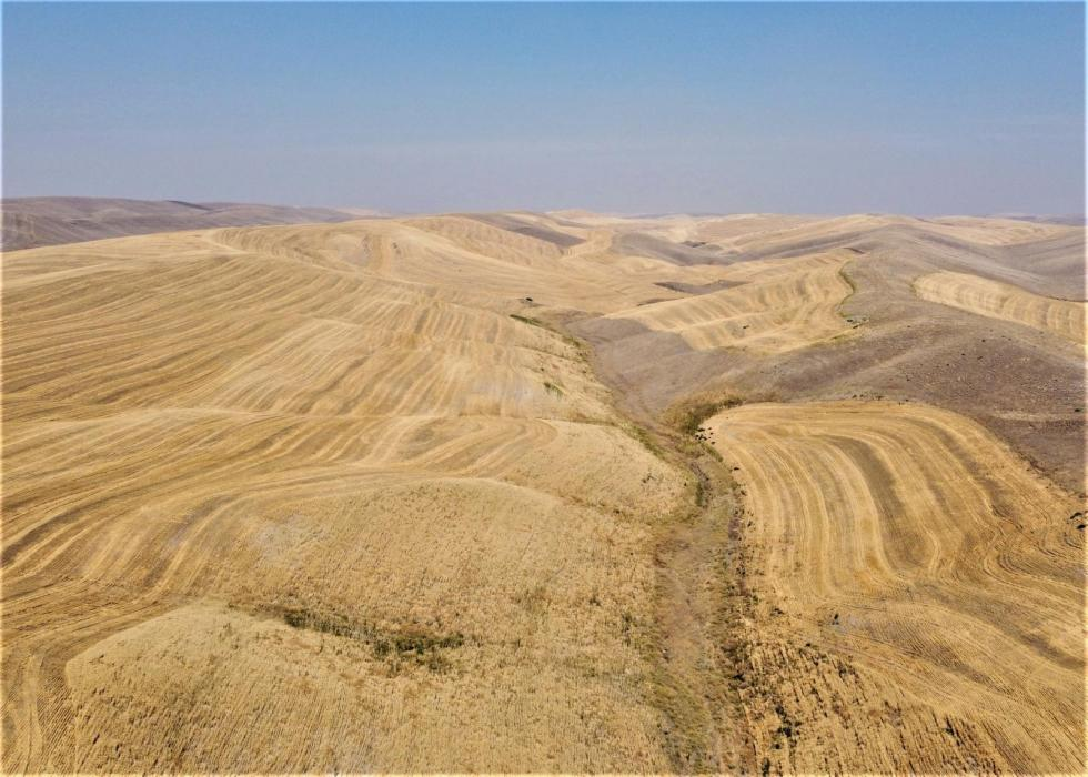 Dryland wheat farm for sale, Walla Walla County, WA
