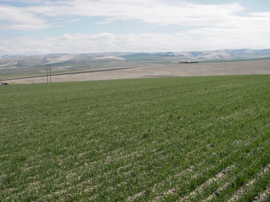 """<img src=""""agricultural-farm-land-for-sale-land-for-sale-land-and-farm-properties-for-sale-real-estate-price-per-acre-washington-state-oregon-idaho-montana-land-for-sale-ground-walla-walla-property-for-sale-sold-land.jpg""""title=""""Highway 11 Dry Land Farm Sold Agricultural Farm Land For Sale land for sale farm prices per acre Property For Sale""""alt=""""Agricultural Farm Land For Sale land for sale farm prices per acre Property For Sale land idaho montana walla walla washington state oregon"""">"""