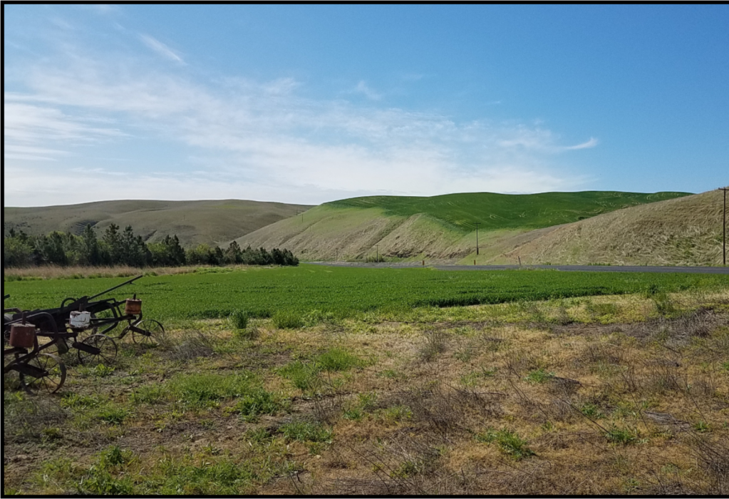 "<img src=""Walla-Walla-County-Dry-Land-Wheat-Farm-For-Sale-Washington-State-Touchet-River-hunting-income-farmground-farmland-property-available-blue-mountain-real-estate-land.jpg""title=""Johnson road touchet river washington dry land wheat farm for sale hunting ground farmground property available walla walla county"">"