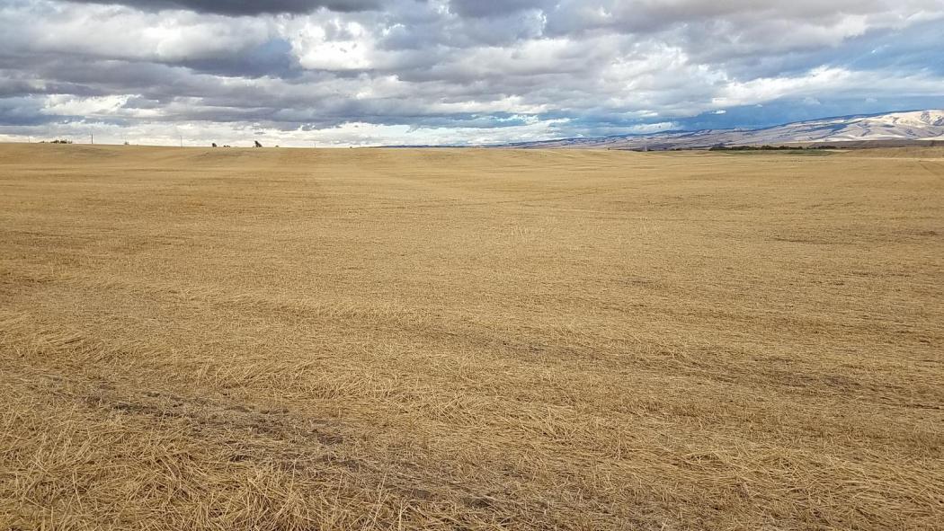 "<img src=""Telephone-Pole-Umatilla-County-oregon-Irrigated-wheat-farm-for-sale-Walla-walla-washinigton-blue-mountains-land-farmland-farmground-water-rights-tillable-peas-bushels-acre-property-for-sale-sold-land-for-sale.jpg""title=""Telephone Pole Road Irrigated Wheat Farm Umatilla County Oregon""alt=""Telephone Pole Umatilla County Oregon Irrigated wheat farm for sale walla walla washington blue mountains land farmland farmground water rights tillable peas bushels acre property for sale sold land for sale"">"