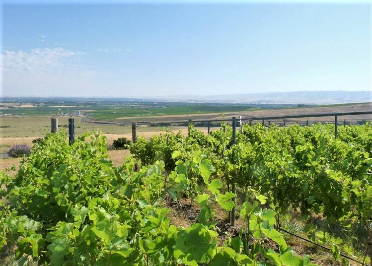SeVein Vineyard Sold Umatilla County