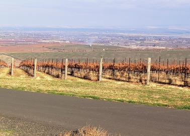 "<img src=""SeVein-vineyard-for-sale-Walla-Walla-AVA-County-Washington-wine-real-estate-broker-sell-buy-wineries-vineyards-sold-pacific-northwest-washington-state-near-me-valley.jpg""title=""SeVein vineyard for sale in walla walla county Washington wineries wine vineyards real estate broker specialty""alt=""SeVein vineyard for sale near in around Milton Freewater Oregon Walla Walla Valley AVA Washington wineries vineyards wine tasting"">"
