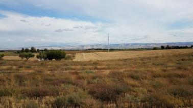 """<img src=""""farms-for-sale-in-washington-state-wheat-farm-building-property-stateline-road-farmland-farm-for-sale-walla-walla-farm-ground-property-for-sale-sold-land-for-sale-farms-for-sale-washington-state-farms-in-washington-state-winery-vineyard-for-sale-potential-winery-site.jpg""""title=""""Wheat Farm Rural Building Lot Property Stateline Walla Walla Washington""""alt=""""farms for sale in walla walla washington state farmland farm for sale walla walla farm ground property for sale wheat farm development"""">"""