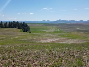"<img src=""Idaho-wheat-farm-for-sale-farms-near-me-sales-acre-dryland-sold-farmland-dry-land-wheat-farm-idaho-irrigated-farmground-property-for-sale-pacific-northwest-Idaho-farm-brokers-real-estate-agent.jpg""title=""Idaho Wheat Farm For Sale""alt=""Idaho wheat farm for sale near me sales acre dryland sold farmland dry land wheat farm Idaho irrigated farmground property for sale pacific northwest Idaho farm brokers real estate agent"">"