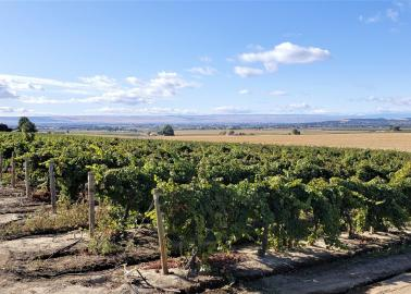 "<img src=""irrigated-farm-vineyard-home-for-sale-sunnyside-washington-yakima-valley-ava-roza-irrigation-water-rights.jpg""title=""irrigated farm and vineyard for sale sunnyside washington yakima valley ava with water rights from Roza Irrigation District""alt=""irrigated farm and vineyard for sale sunnyside washington yakima valley ava with water rights from Roza Irrigation District"">"