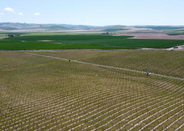 "<img src=""walla-walla-valley-AVA-irrigated-farm-and-vineyard-995,000-umatila-county-oregon.jpg""title=""Irrigated farm and vineyard for sale in Umatilla county Oregon wineries wine vineyards real estate broker specialty""alt=""Irrigated Walla Walla Valley AVA vineyard for sale near in around Milton Freewater Oregon Walla Walla Valley AVA Washington wineries vineyards wine tasting"">"