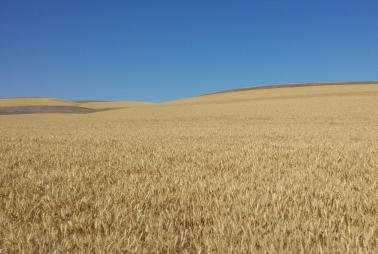 "<img src=""farms-for-sale-near-walla-walla-washington-area-farms-for-sale-near-me-oregon-farm-for-sale-idaho-montana.jpg""title=""farms for sale""alt=""dry land wheat farm for sale sold irrigated"">"