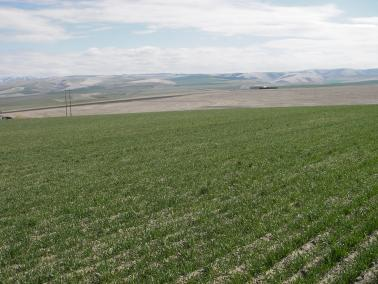 "<img src=""agricultural-farm-land-for-sale-land-for-sale-land-and-farm-properties-for-sale-real-estate-price-per-acre-washington-state-oregon-idaho-montana-land-for-sale-ground-walla-walla-property-for-sale-sold-land.jpg""title=""Highway 11 Dry Land Farm Sold Agricultural Farm Land For Sale land for sale farm prices per acre Property For Sale""alt=""Agricultural Farm Land For Sale land for sale farm prices per acre Property For Sale land idaho montana walla walla washington state oregon"">"